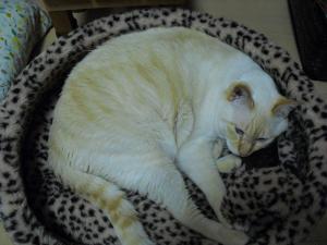 白玉 猫ベッド