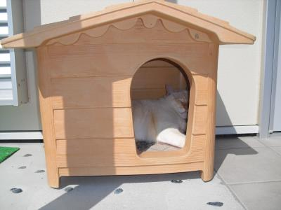 猫小屋の白玉