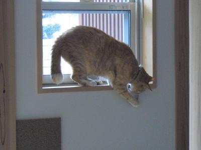 窓辺にジャンプ