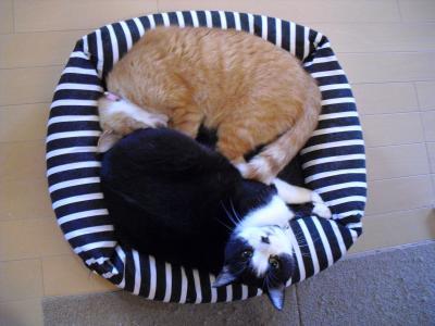 カナと小町 猫だんご