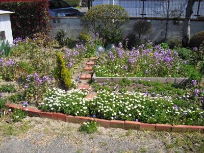 猫舎前の庭