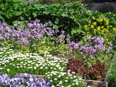 菜園が花壇に