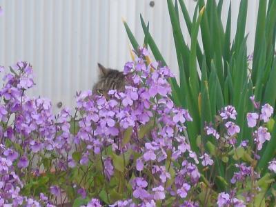 ミント花の中
