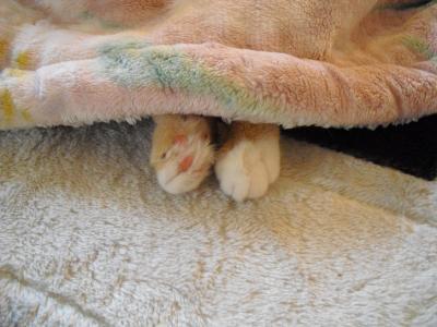 可愛い足が・・・