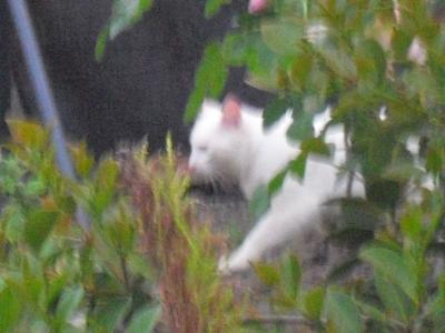 美猫さん、現る!