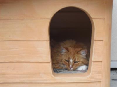 鈴娘 猫小屋の中