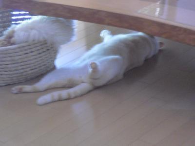 リラックス 白玉