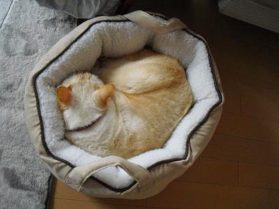 冬猫ベッドの白玉