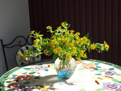 メランポジウム切花