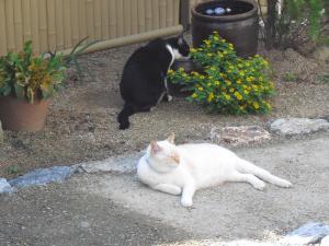 白玉とカナ 庭で