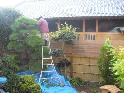 植木の剪定日