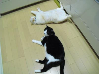 白玉とカナ 台所で寝転がる