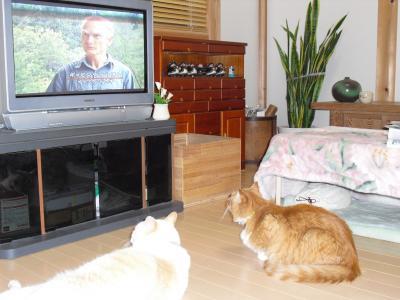 テレビを観る鈴娘、白玉