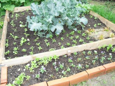 菜園の花壇