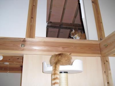 猫タワーから屋根裏へ