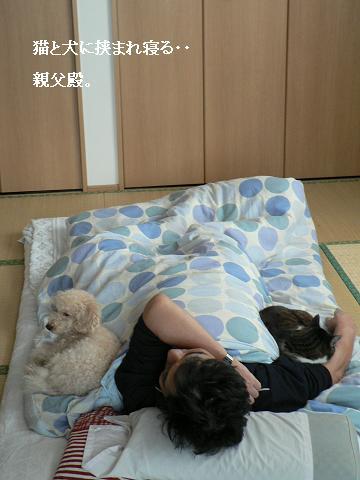 猫と犬と親父殿
