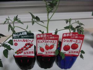 本気野菜ミニトマト