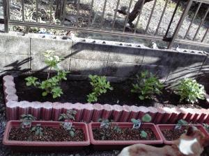 実家の庭110518