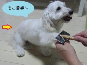 スリッカー②