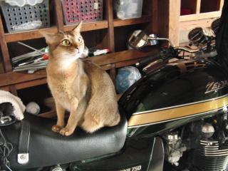 僕のバイク。