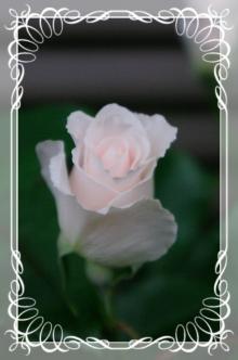 f-rose512 007