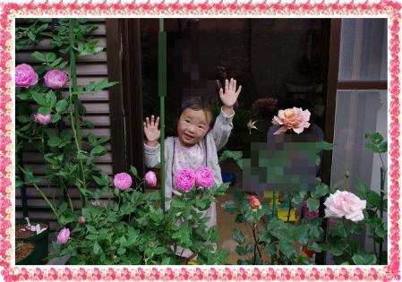 f-rose514 016