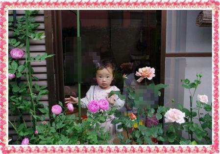 f-rose514 014