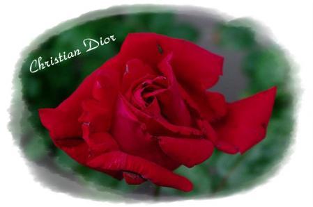 f-rose530 008