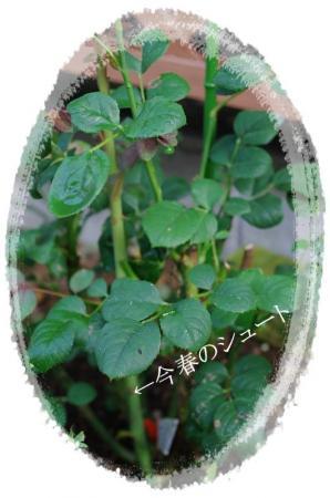 f-rose606 010