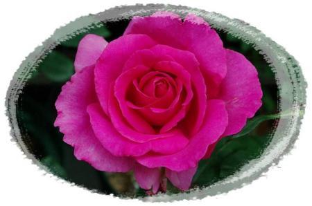 f-rose616 038