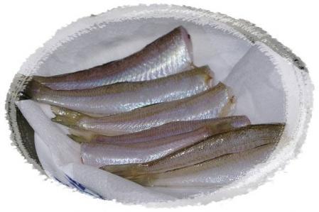 f-fish 008