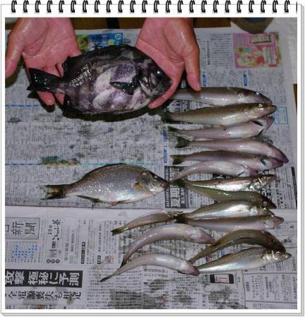 f-fish 031