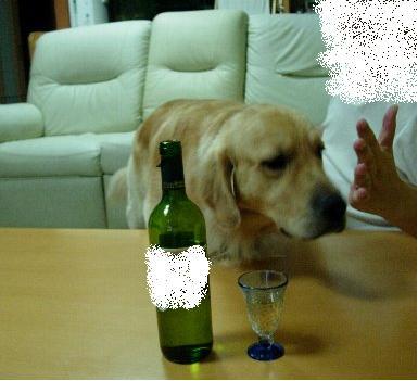 タロとワイン はずれ