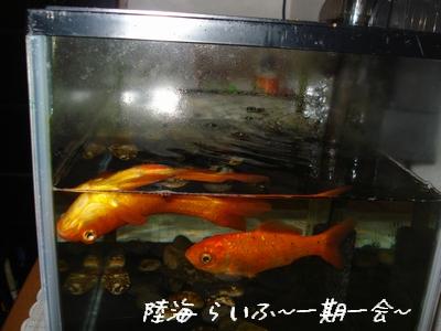 エド&徳次郎