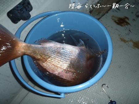 10金 鯛
