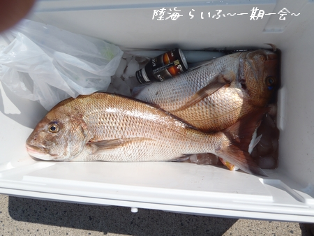 マサシ釣果