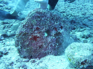 海の中の石貨