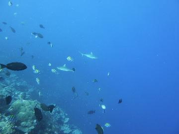 9・15 サメとお魚