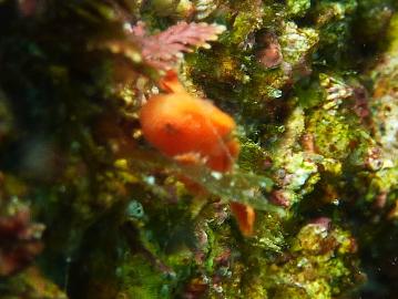 幼魚10・26