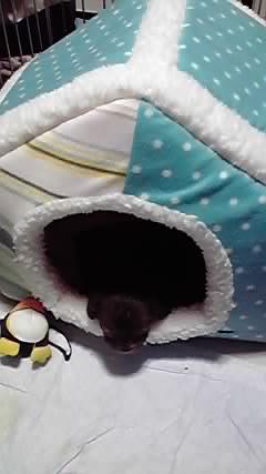 newhousedog.jpg