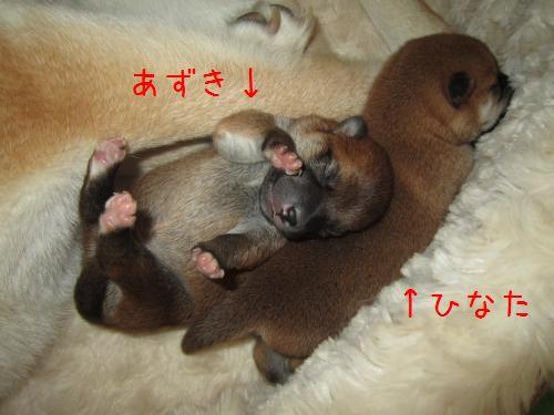 IMG_2604_convert_20110810221245.jpg