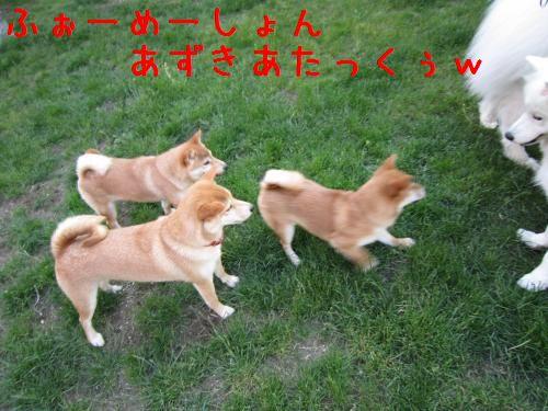 IMG_3878_convert_20110616222719.jpg