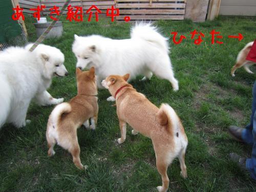 IMG_3881_convert_20110616222900.jpg
