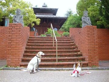 20110503 緑地庭園 (4)