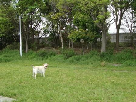 20110503 鶴見緑地ふくちゃん (4)