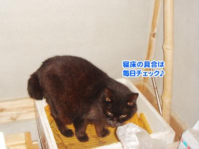 01_20091102192438.jpg