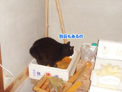 02_20091102192445.jpg