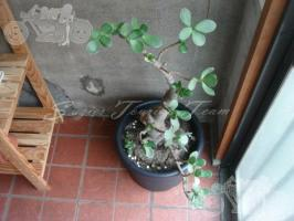 blog_20090930_9092_008
