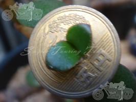 blog_20091010_9102_001
