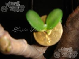blog_20091016_9108_006